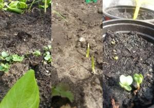 eersteplanten.large